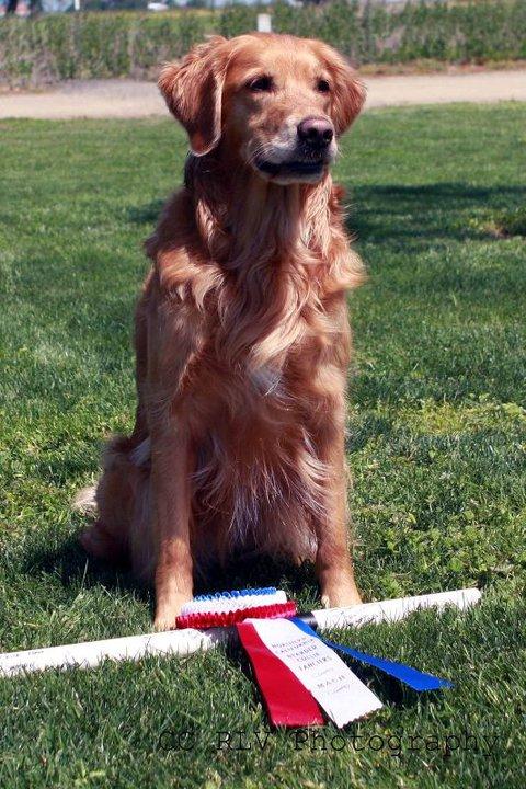 Bob earns her 4th Master Agility Championship