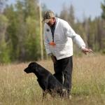 Labrador, Mighy's First Field Trial