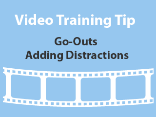 Training Tips - Adding distractions to Early Go-Outs