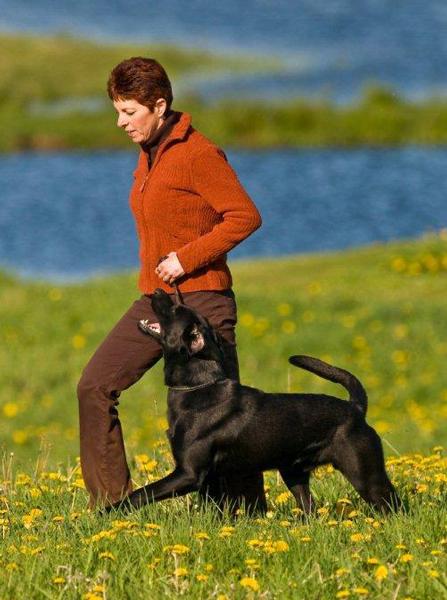 Janice and Labrador Louie heeling