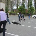 Bosleys - Obedience in the parking lot