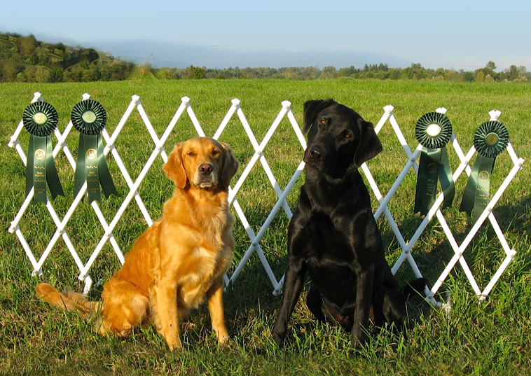 Pounce and Remi earn Senior Hunt Passes