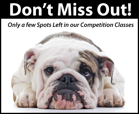 k9 competition classes almost full