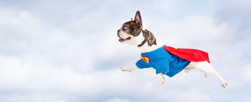 super-dog