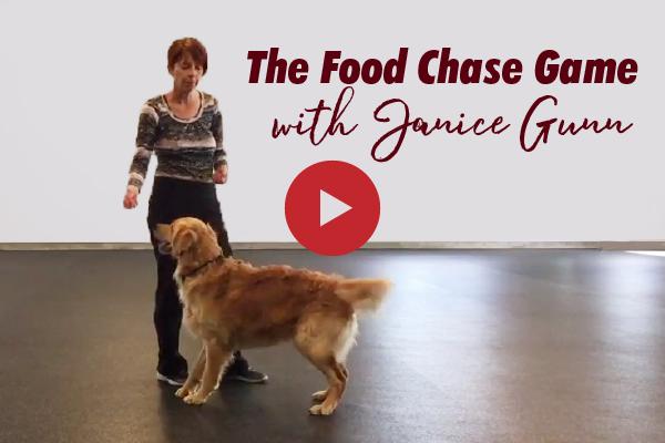 Janice Gunn's Food Chase Game - video dog training tip