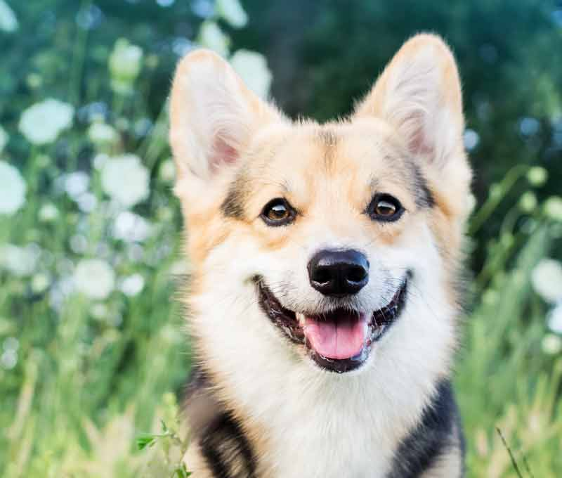 Dog Training from 18 weeks to adult