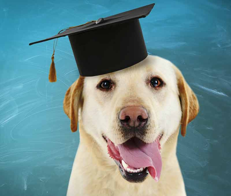 Graduate Dog Training Class