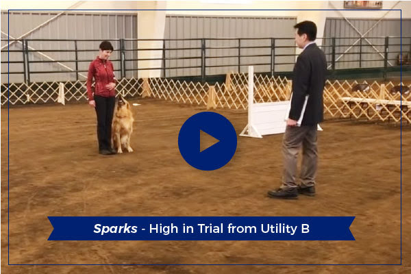 Sparks – High in Trial!