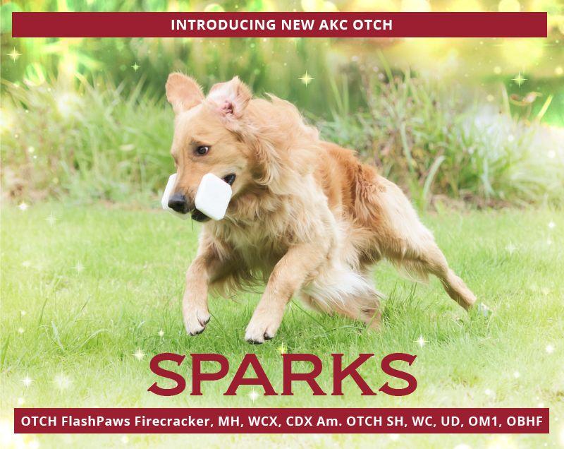 Sparks AKC OTCH