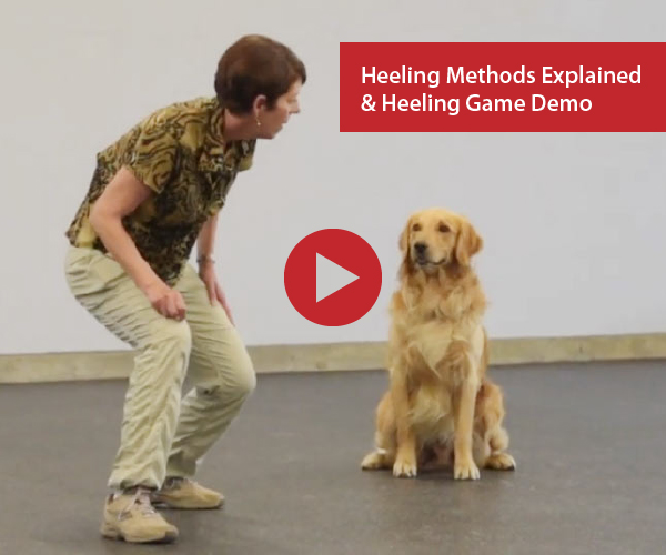 Heeling Methods Explained and Start Line Stays Heeling Game