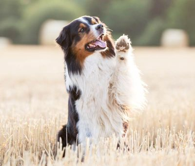 dog learning tricks