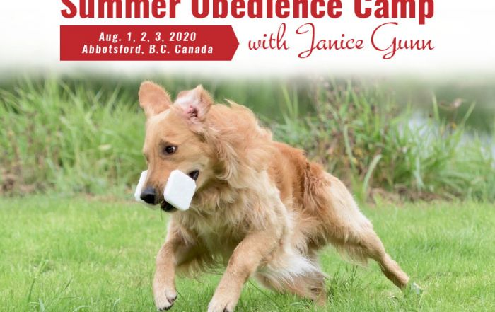Janice Gunn's 2020 Summer Obedience Camp Registration is OPEN