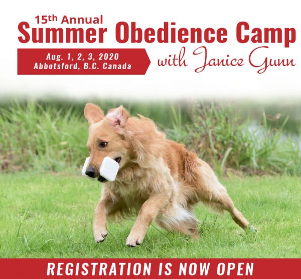 Competition Obedience Summer Camp 2020 with Janice Gunn