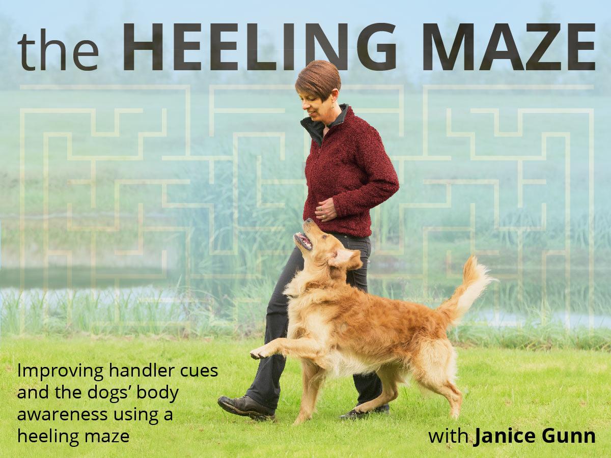 obedience heeling exercise - the Heeling Maze with Janice Gunn