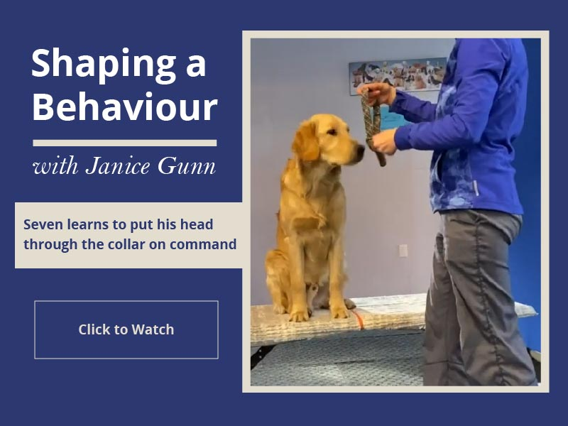 Shaping a Behaviour with Janice Gunn