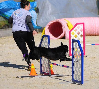 dog trainer - Sam Langley
