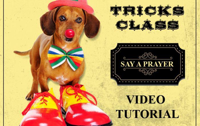 Teach you dog to say a prayer