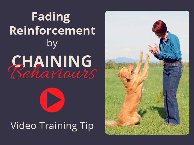 Fading Reinforcement by Chaining Behaviours