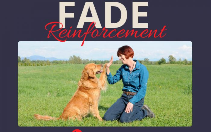 How to Fade Reinforcement in Dog Training