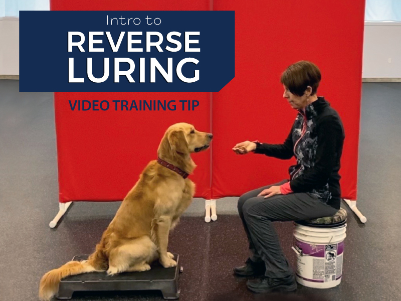 Intro to Reverse Luring