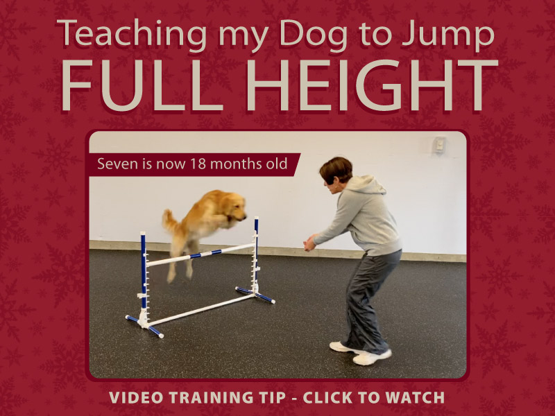 Teaching my dog to jump full height in competition obedience