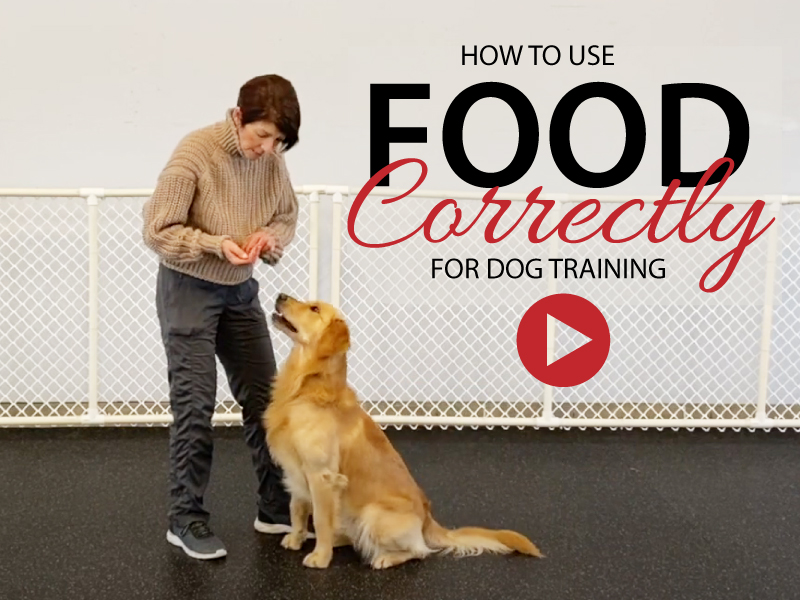 How to use food correctly in Dog Training