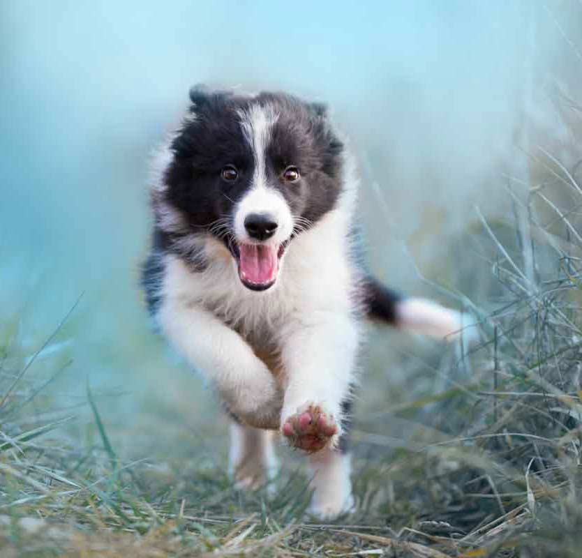 puppy training class