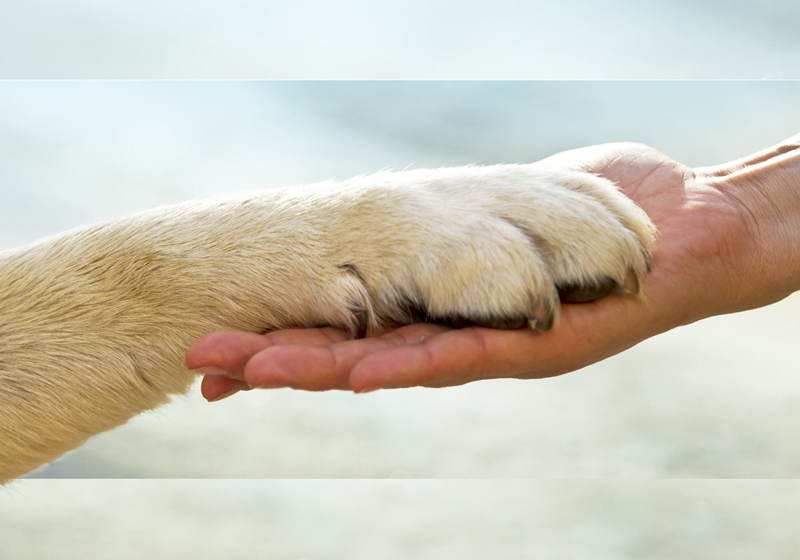 paw in hand | Rally builds the human animal bond