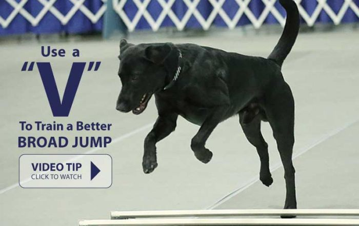 "Using a ""V"" to Teach Your Dog a Better Broad Jump"