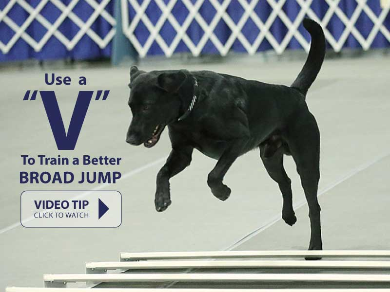 """Using a """"V"""" to Teach Your Dog a Better Broad Jump"""