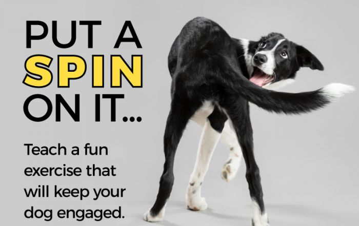 Teaching your dog to spin