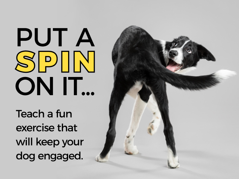 Put a Spin on it – Teaching the Spin