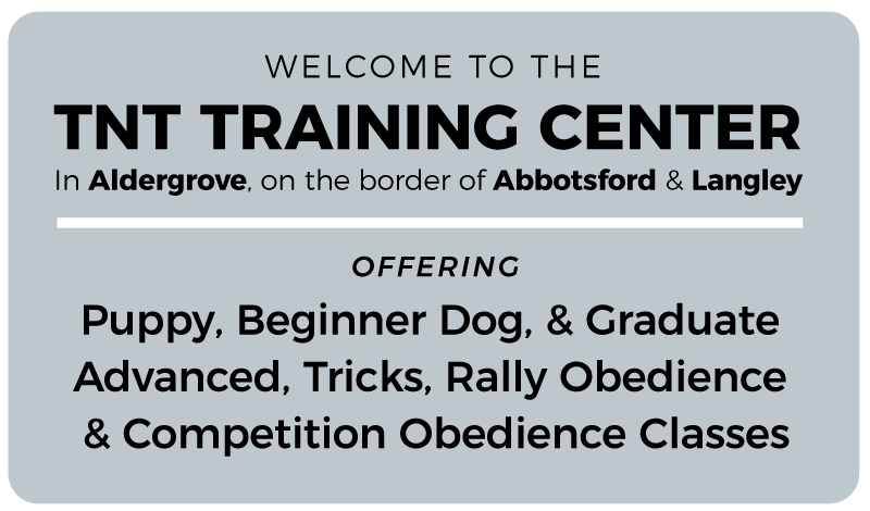 dog training classes at tnt including puppy, dog, trick, rally and competition obedience